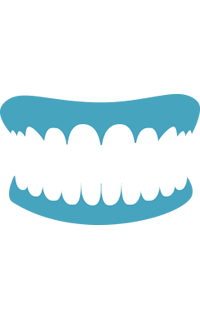 3-1-adult-teeth-left-tooth-truth-icon-03.png